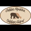 Oddan gård / Oddan alpakka