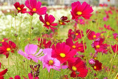 【玩轉中台灣】花卉博覽會期間限定