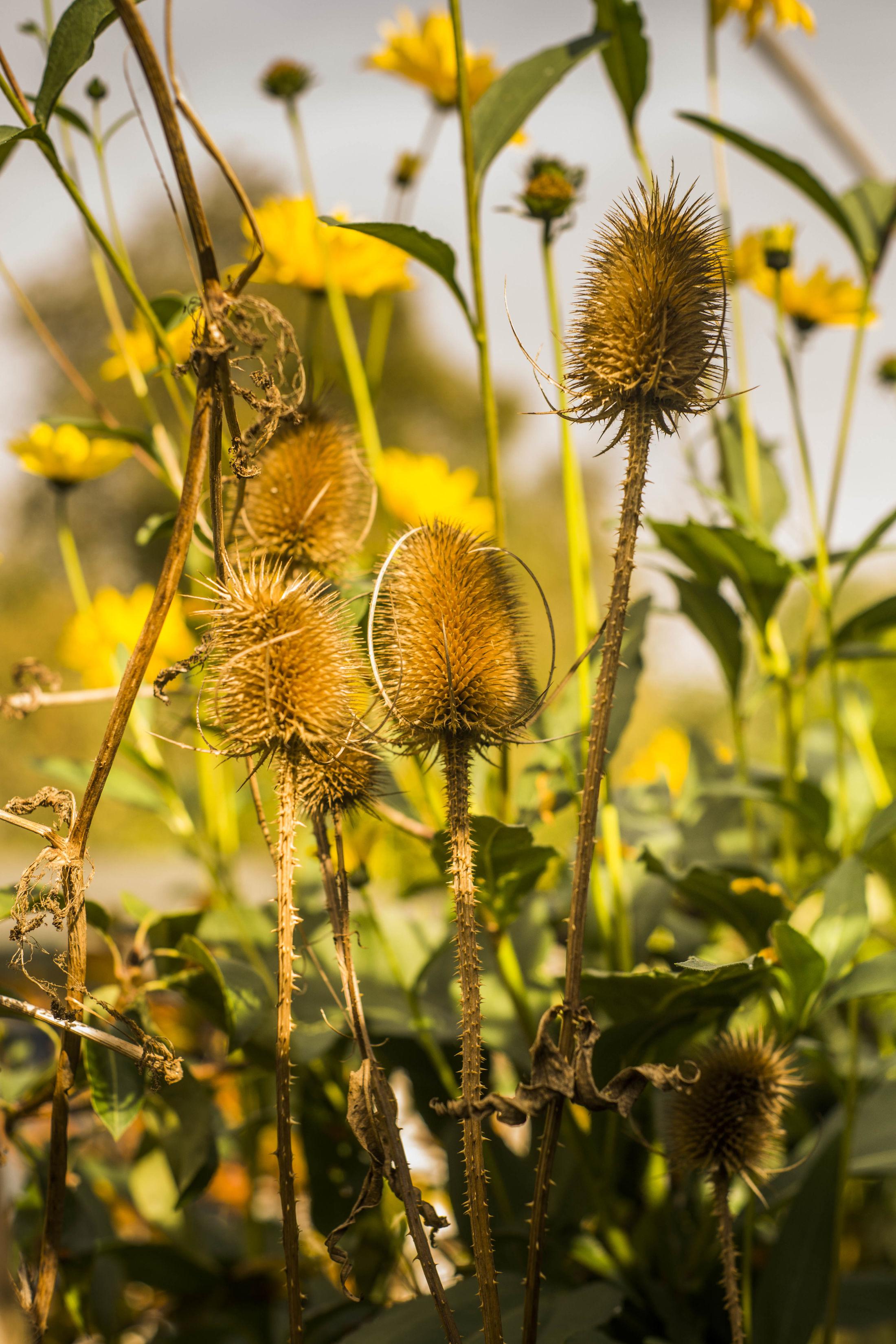 Henri, Tuin & Botanisch, Happix
