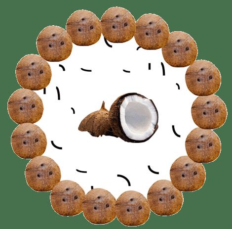 L'huile de noix de coco, super-hero pour le microbiote