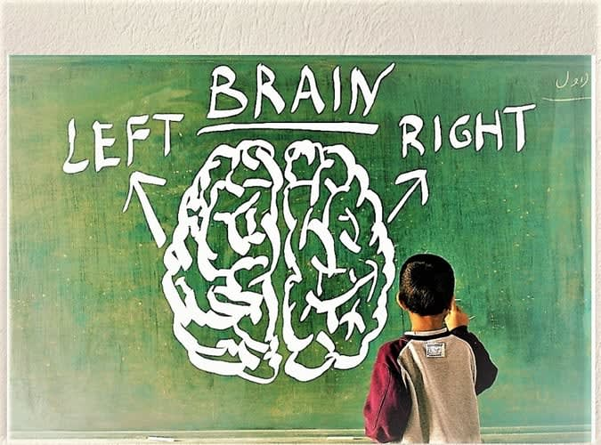 left and right brain hemisphere