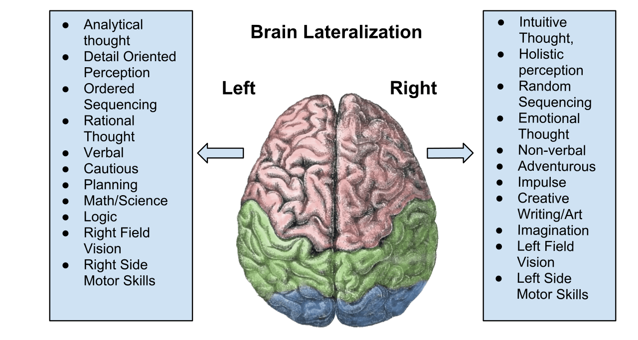 functions of right and left hemispheres