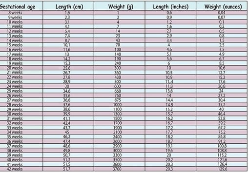 the fetal average length and weight