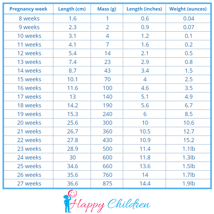 fetal weight chart in grams from 8 weeks to 27 weeks