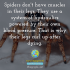 Spiders don't have muscles in their legs. They use a system of hydraulics powered by their own blood pressure. That is why their legs curl up after dying.
