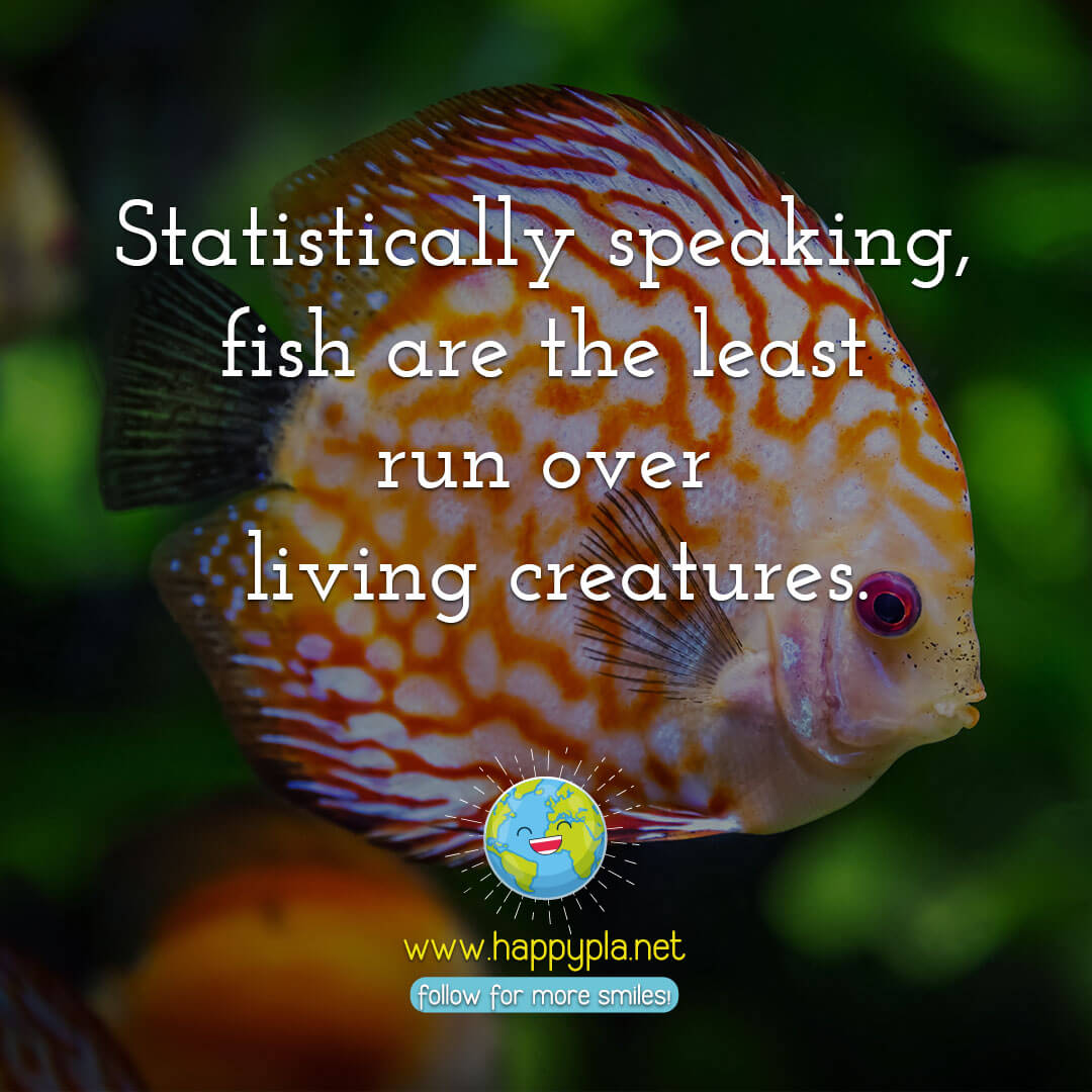 Statistically speaking, fish are the least run over living creatures.