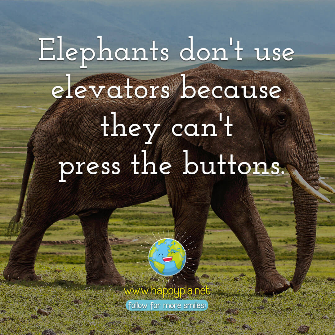 Elephants don't use elevators because they can't press the buttons.