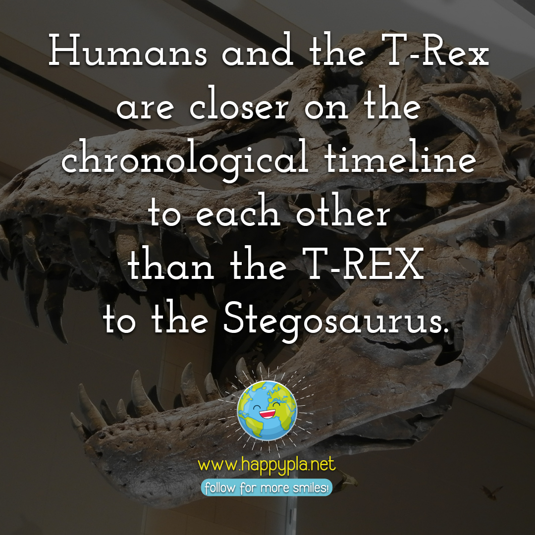 Humans and the T-Rex are closer on the chronological timeline than the T-REX and the Stegosaurus.