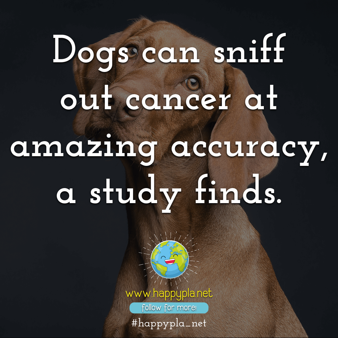 Dogs can smell cancer