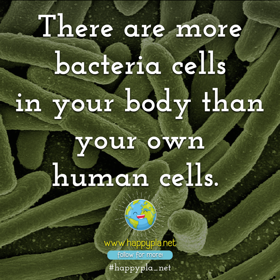 There are more bacteria cells in your body than your own human cells.