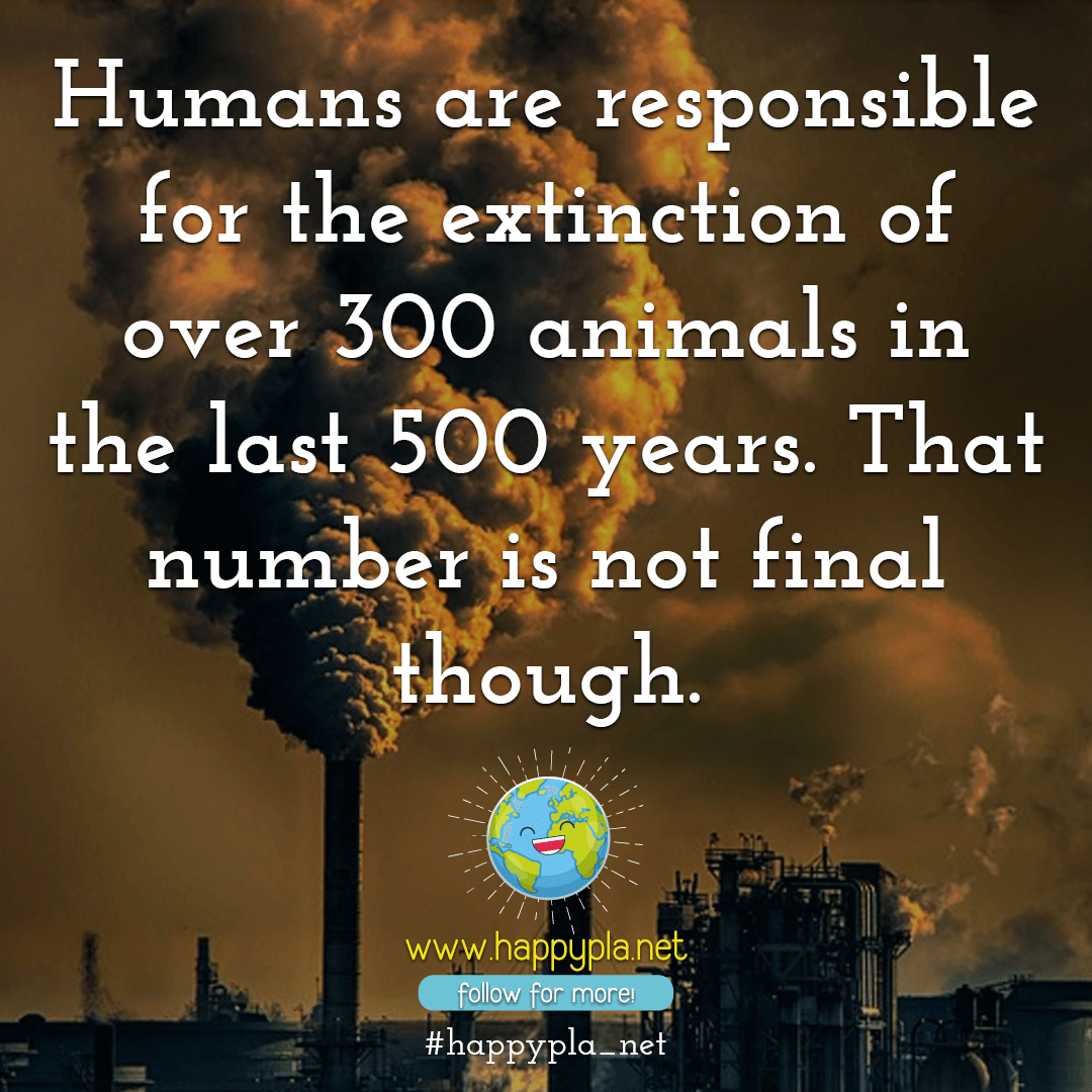 Humans are responsible for the extinction of over 300 animals in the last 500 years. That number is not final though.