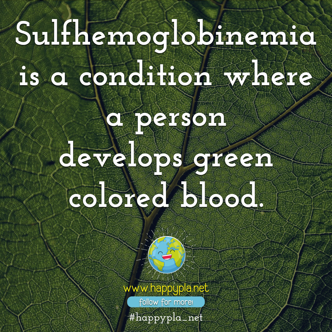 Sulfhemoglobinemia is green blood
