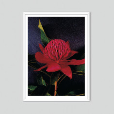 Waratah II - photographic artwork