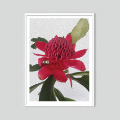 Waratah - photographic artwork