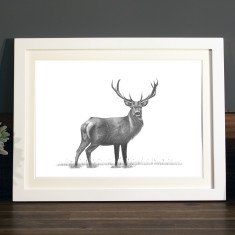 Stag illustration Print