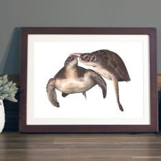 Turtles illustration Print