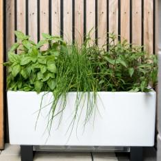 Mini Bench Self Watering Planter Hardtofind