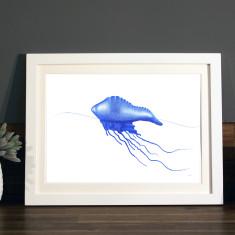 Bluebottle illustration Print