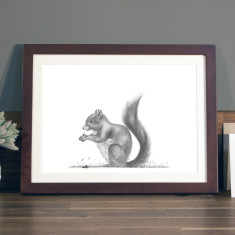 Squirrel illustration Print