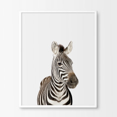 Baby Zebra Nursery Art Print