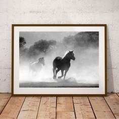 Wild Stallions Horse Print