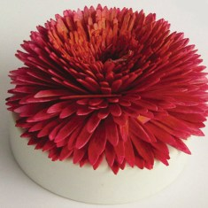Colour changing blooming scent diffuser