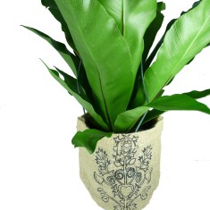 Scroll hanging pot plant holder