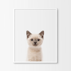 Birman Kitten Nursery Art Print