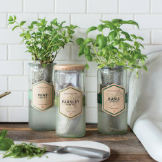 Eco Planter (Mint or Basil)