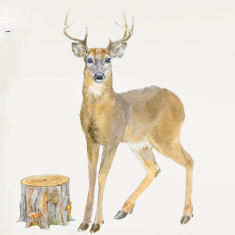 Stag Deer Wall Sticker