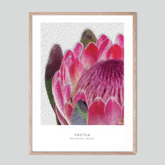 Protea II - photographic artwork