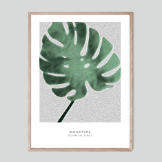 Monstera - photographic artwork