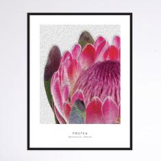 Protea II