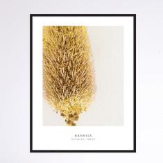 Banksia II