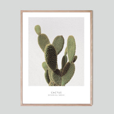 Cactus - photographic artwork