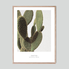 Cactus II - photographic artwork