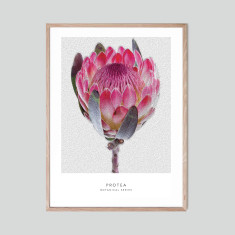 Protea - photographic artwork
