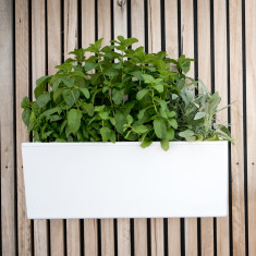 Mini wall self-watering planter