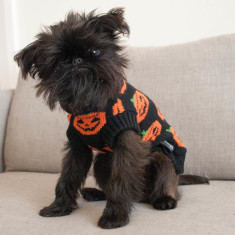 Halloween Pumpkin Knitted Dog Sweater