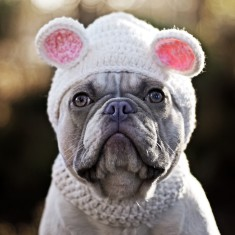 Crochet Bear Pet Hat