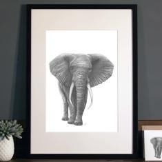 Elephant illustration Print