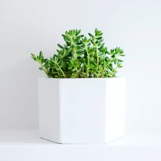 Self-Watering White Planter