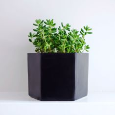 Black Self-Watering Planter