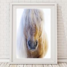 Palomino Horse Print