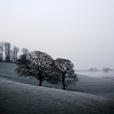 Trees in frost photograph