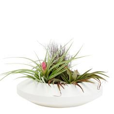 Areaware radial vessel dish