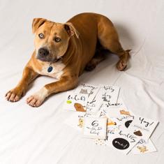 Pet Milestone cards