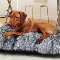 Sasha & Me FOFO dog bed