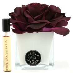Herve Gambs diffuser with plum rose in white cube