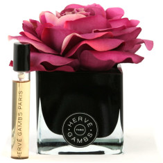 Herve Gambs with fuchsia rose in black cube